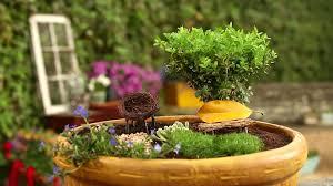 create a container fairy garden