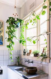 Send Us Your Indoor Garden Pics  GardenistaClimbing Plants Indoor
