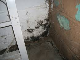 mold from basement flooding