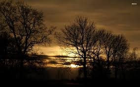 Dark Trees At Sunset Wallpaper Nature Wallpapers 36151