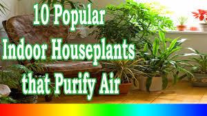 Best Indoor Plants - 10 Popular Indoor Houseplants that Purify Air - YouTube