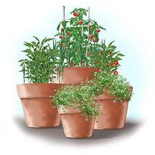 Cool Container Vegetable Gardens  University Of Maryland ExtensionContainer Garden Plans Tomatoes