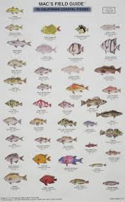 California Rockfish Chart Macs Field Guides California Coastal Fish Craig Macgowan