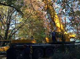 our familyowned company has provided quality tree services for more than 40 years we are a fully licensed and insured business that caters to residential shifflett service r75