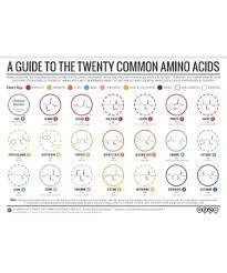 Amino Acid Chart Pdf Scouting Web