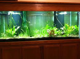 new aquarium set up