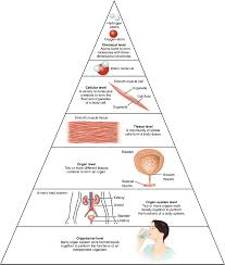 Body Systems Chart 1 2 Structural Organization Of The Human Body Anatomy And