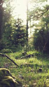 mo50-forest-green-nature-tree-jonas ...