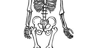 Small Picture Human skeleton coloring page