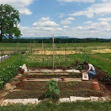 Small Picture Community gardening Wikipedia