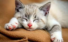 cat pictures full hd cat pictures cat sleeping pics