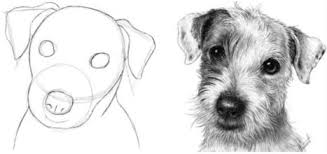realistic dog drawing step by step. Plain Drawing Seeing Shapes In A Photo Of Dogu0027s Head Drawing Tutorial  And  Painting Tutorials And Realistic Dog Step By M