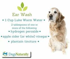 dog ear infection home remedy peroxide
