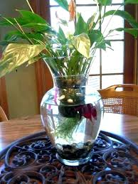 beta fish plant tank beta fish bowls fish with plant lucky bamboo in bowl inspirational decoration
