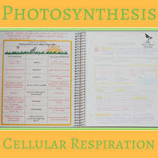 Cell Processes Energy Biology Classroom Photosynthesis