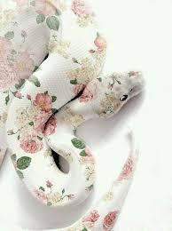 cute snake wallpaper. Wonderful Cute Flower Pattern White Snake Girl Wallpaper Cute Kawaii Smartphone Iphone  Galaxy Inside Cute Snake Wallpaper R