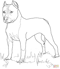 Small Picture American Staffordshire Terrier coloring page Free Printable