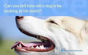Dog Teeth Health Chart Dr Ernies Top 10 Dog Dental Questions And His Answers
