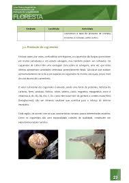 Resultado de imagem para IMAGENS DE RECEITAS DE COMIDAS DOS PAISES BAIXOS