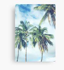 Palm Trees Tumblr Canvas Prints Redbubble