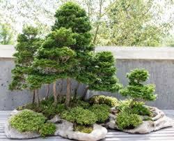 bonsai gardens. What Is Bonsai? Bonsai Gardens