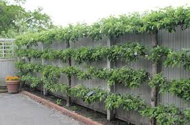 Nice Chain Link Fence Covering Ideas