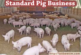 Pig Farming Business Plan Standard Pig Business Plan Plan With 3 Years Financial Analysis