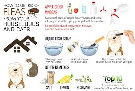 here are the top 10 ways to get rid of fleas from your house dogs and cats