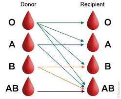 the best blood donation ideas blood donation blood types chart