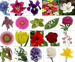 name all types flowers flowers meanings types of flower with names all types of flowers