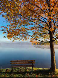 Autumn Wallpapers: Free HD Download ...