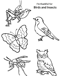 Small Picture birds and insects coloring pages insect coloring pages for kids