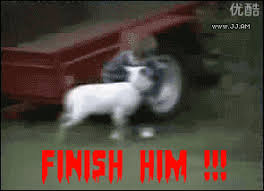 funny goat gif