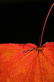 Image result for Transparent colors and still photography