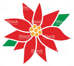 Weihnachtssternblumen Stock Vektor Art Und Mehr Bilder Von