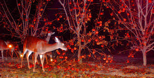Protect Fruit Trees From Deer  YouTubeBest Fruit Trees For Deer