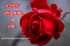 200 best good morning my love images