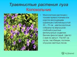 Презентация на тему Луг природное сообщество На лугу может  2 Травянистые