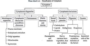Cell Organelles Structure Function Chart Classification Of Cytoplasm With Diagram Term Paper