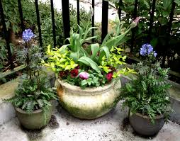 a shady container garden northwest cart with container planting ideas