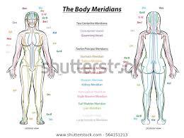 Meridian System Chart Female Body Principal Stock Vector