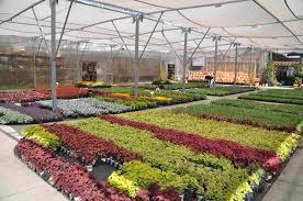 rountree plantation garden center rountree plantation nursery in charlotte