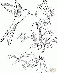 Small Picture Stage Animal Bird Coloring Page Hummingbird Animal Coloring Pages