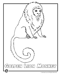 rainforest animals coloring pages free printable a animal for kids