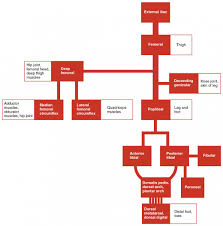 Venous Blood Flow Chart Circulatory Pathways Anatomy And Physiology Ii