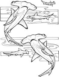 Small Picture Hammerhead Shark coloring page shark collection Pinterest