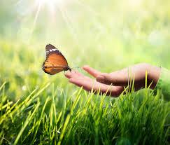 UR-Vertrauen Natur-Tag – OMkara