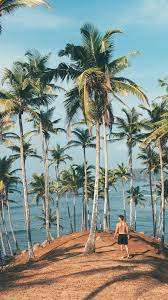 ob40-summer-vacation-man-palm-tree-nature