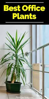 Pictures for the office Signs Harvard Business Review Best Indoor Plants For The Office