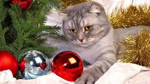 Cute Cats Christmas HD Wallpapers - HD ...